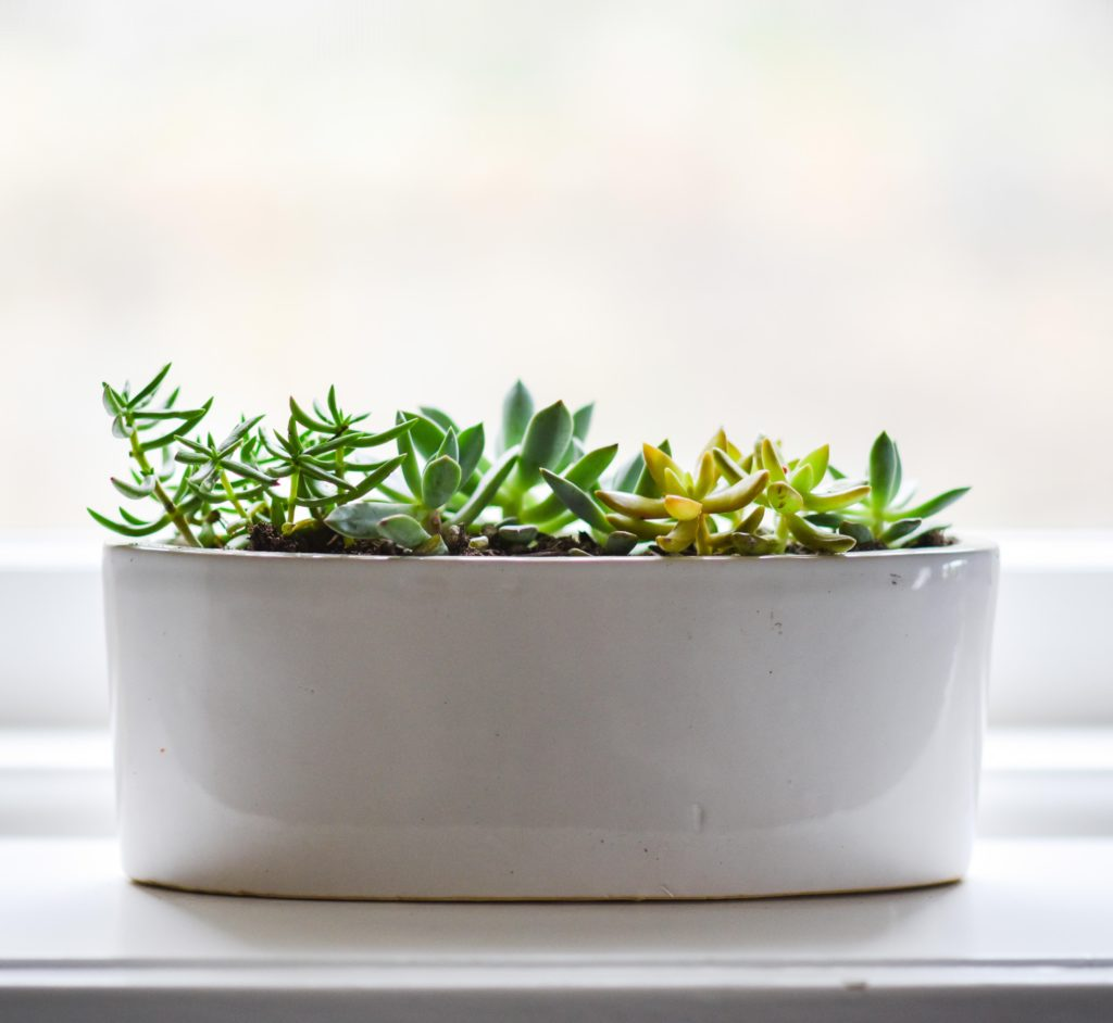 biljke