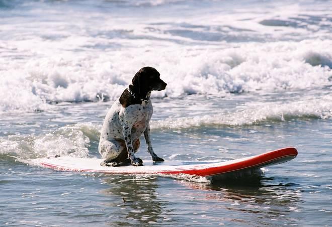 surf-dog-4