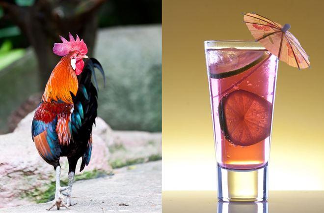 Pijmo za pijetlov rep!