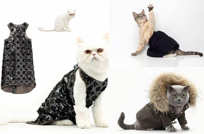 Haute CATure: visoka moda za mačke