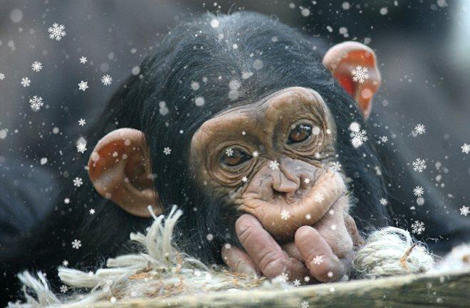 Božićni darovi za stanovnike Zoološkog vrta