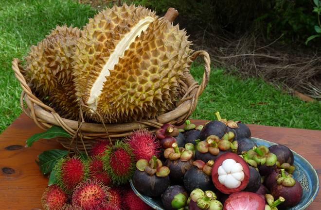 Durian – kralj voćki neugodnog mirisa
