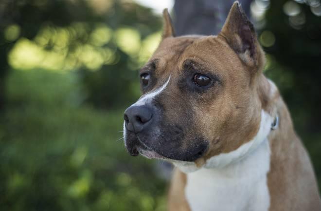 (S)pas za vas: Predstavljamo vam Oskara