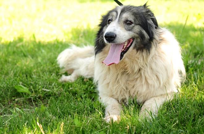 (S)pas za vas: Predstavljamo vam Shila