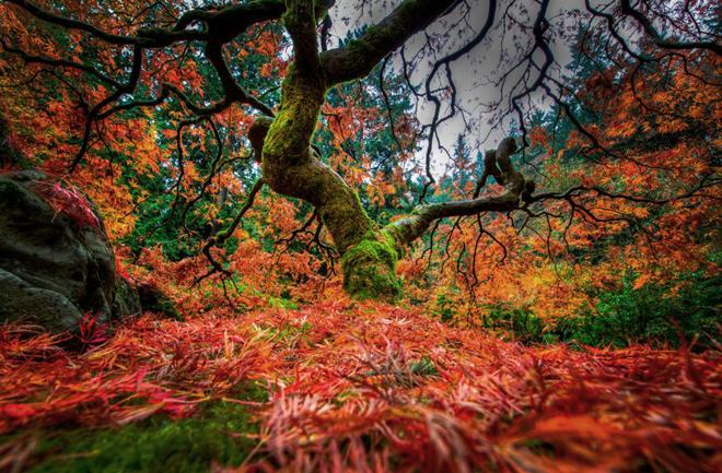 Čarobni japanski vrtovi