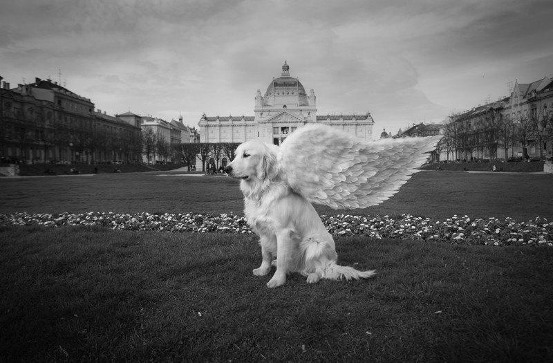 Upoznajte 'prave' anđele