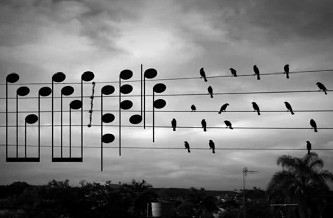Ptice na žicama skladale melodiju