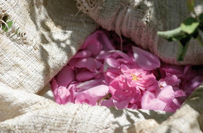 Buket ruža u svakoj tubici Dr.Hauschka ružine kreme