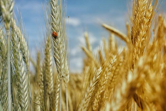Ključ vitalnosti su prehrambena vlakna
