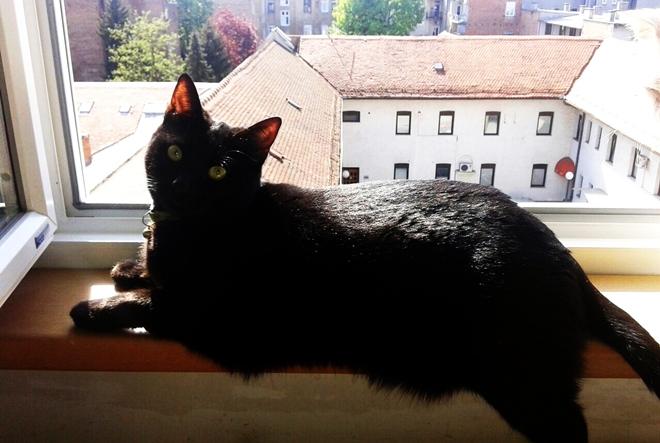 Imaju li mačke Down sindrom?