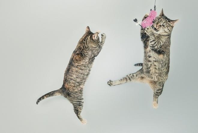 Igrom potaknite svoju mačku na fizičku aktivnost