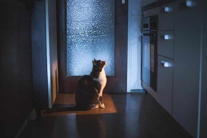Hranite li svoju mačku pravilno?