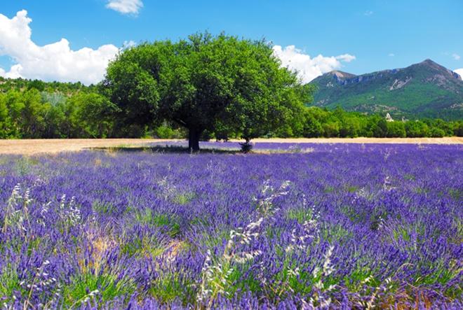AlpStories donosi personalizirane prirodne kozmetičke proizvode za namirisnije ljeto