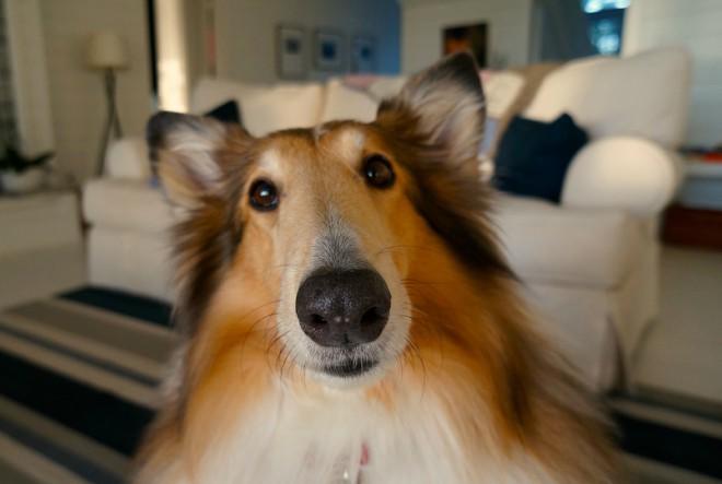 7 savjeta za novopečene vlasnike pasa