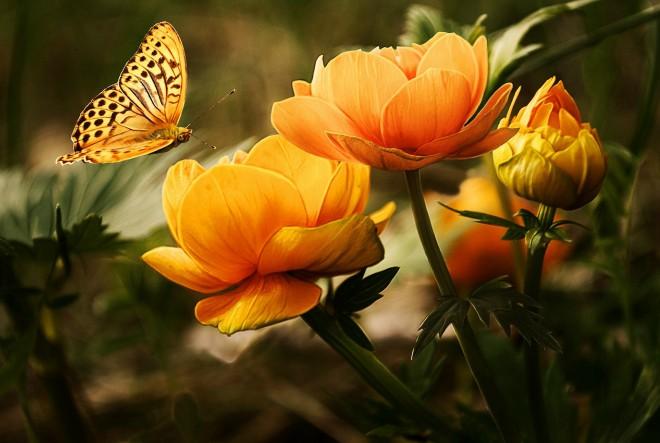 Prirodne recepture za rosaceu i seboroični dermatitis