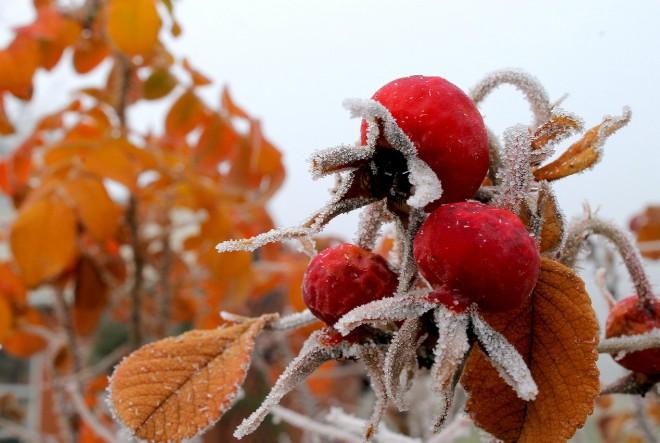 Sezonske namirnice za zimske dane