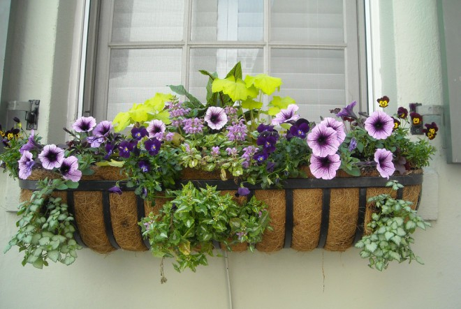 Snaga cvijeća