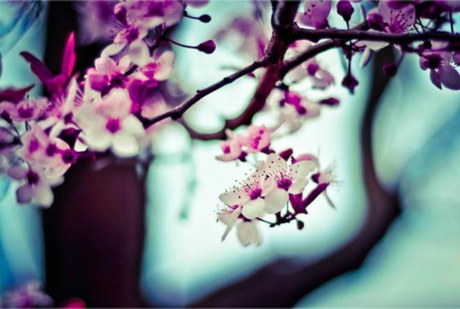 proljeće, horoskop