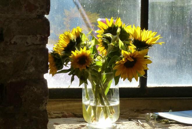 Upoznajte ljekovita svojstva suncokreta