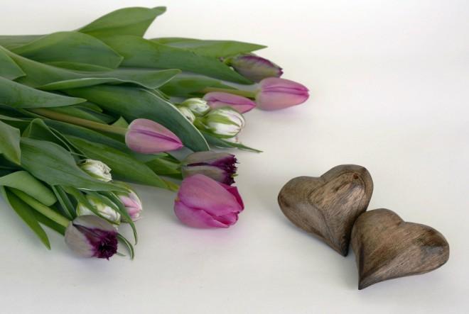 tulipani, cvijeće
