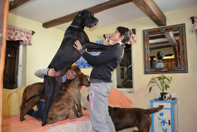 Sara David – škola i hotel za pse
