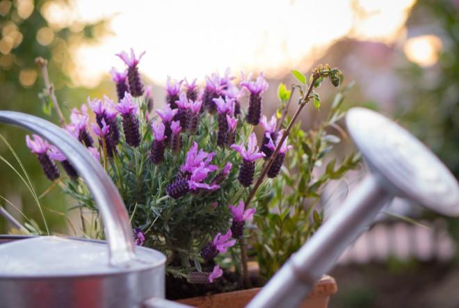 biljke, vrt