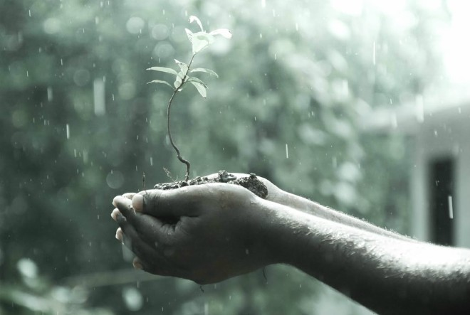 biljka-njegovati-gajiti-ljubav