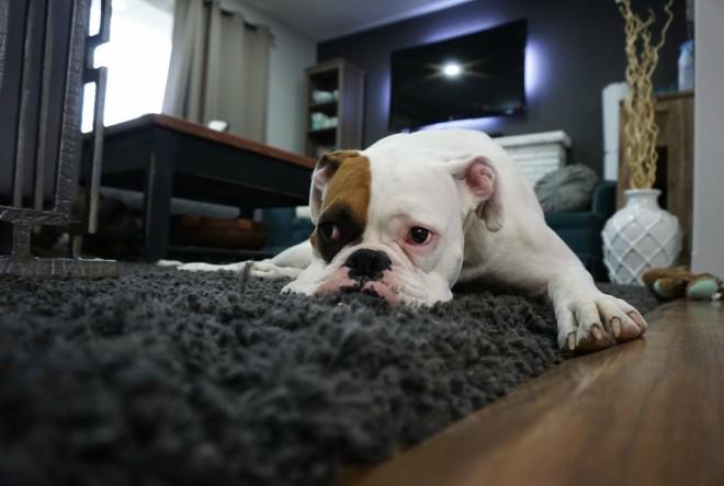 Koji su to idealni psi za djecu i obitelj?