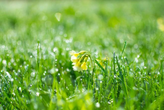 Spremni ste za proljetne alergije?