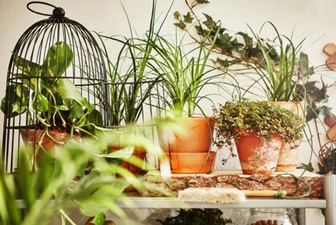 Pretvori svoj dom u zelenu oazu u pet koraka