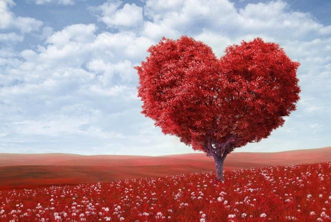 Ljubav preko mreže