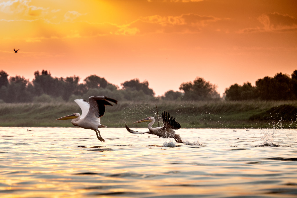 500px Photo ID: 44977156 - Pelicans from Danube Delta.