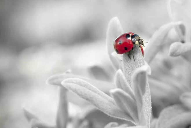 ladybug-insect-nature