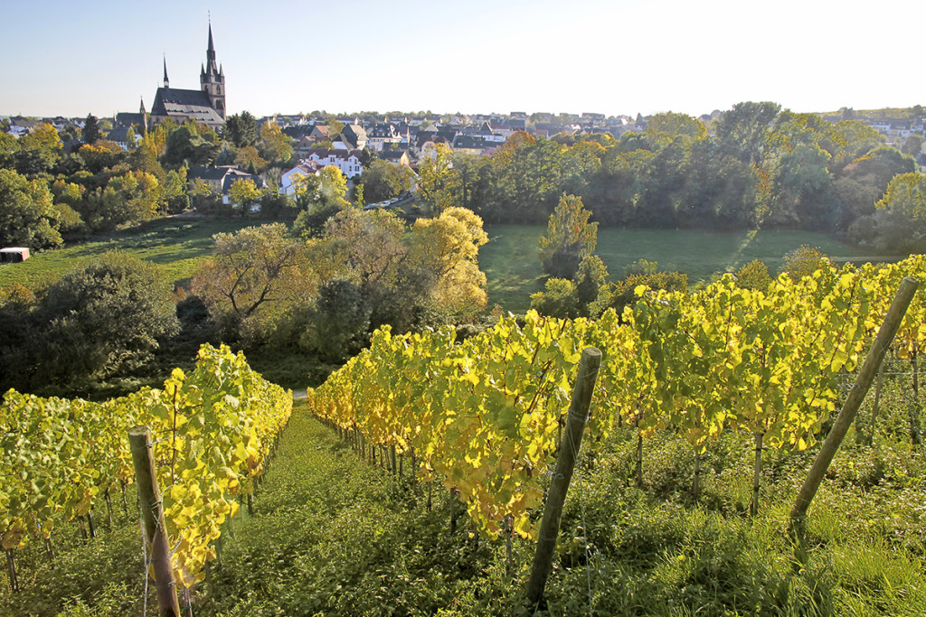View from the vineyard to Kiedrich, Rheingau, Hesse, Germany