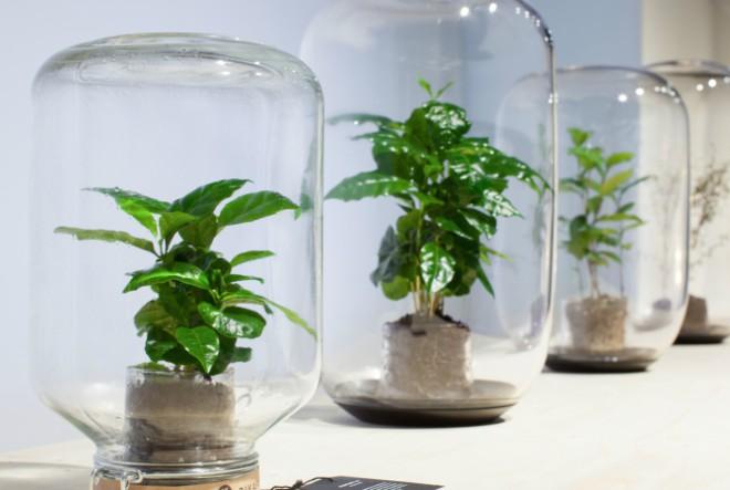 Biljka koju nije potrebno zalijevati