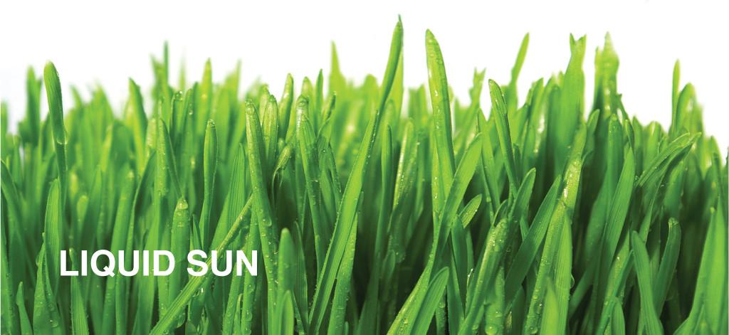 Mlada zelena psenica960x441-01