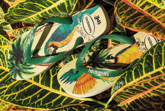 Havaianas IPÊ kolekcija japanki – u misiji poticanja svijesti i želje za očuvanjem rijetkih brazilskih vrsta