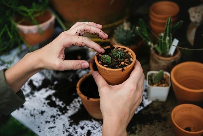 Dnevna doza biljaka – iz ljubavi prema biljkama