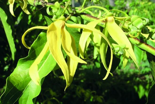 Klorane Ylang-Ylang linija za zaštitu kose od sunca