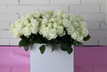 Sve što niste znali o ruži – kraljici cvijeća