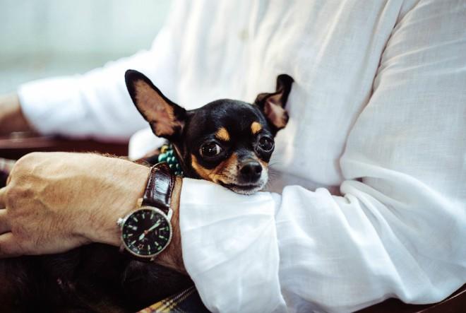 Psi ne vole kad ih češkamo po trbuhu