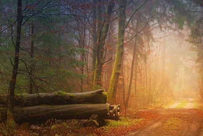 Samoća i put bez povratka