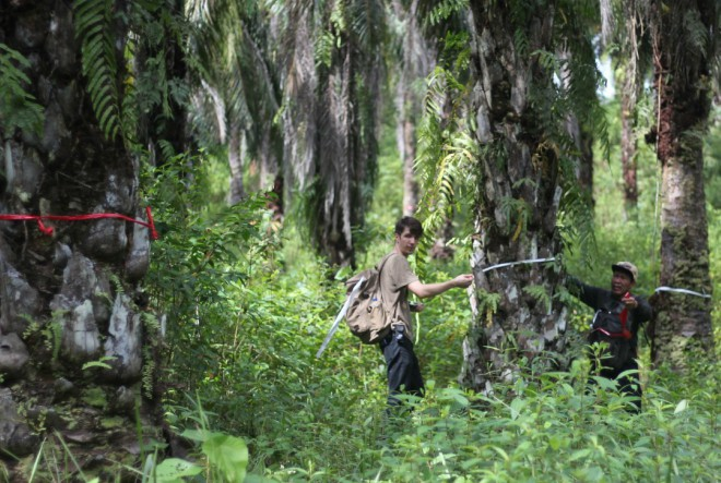 Lushev Orangutan sapun podiže svijest o deforestaciji