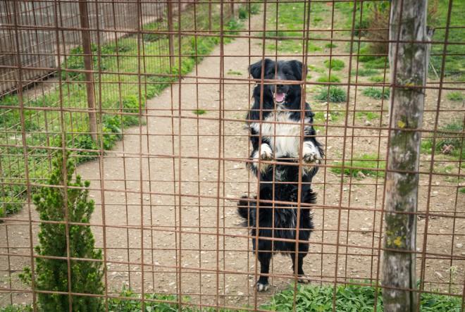 Pan i Lidl donirali više od 11 tona hrane skloništima za pse