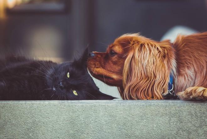 Koga birate? Psa ili mačku?