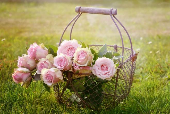 Zavodljivi miris ruže