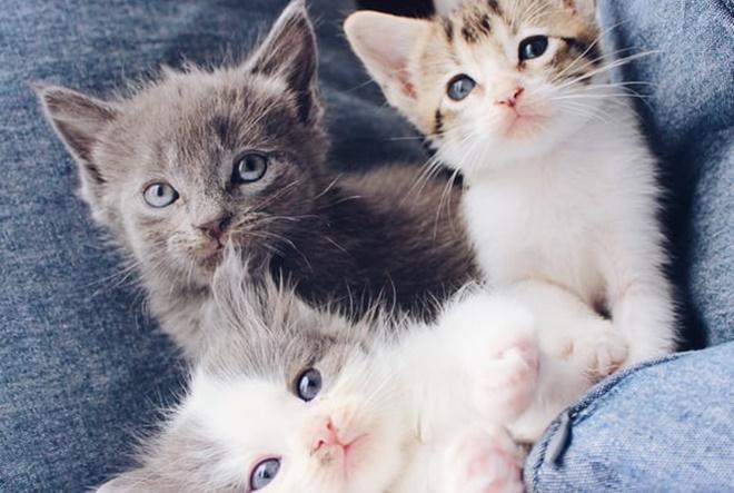 Zašto je nemoguće mrziti mačke?