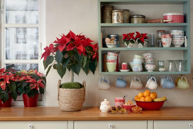 Inspiracija za dekor s božićnim zvijezdama u prirodnom stilu