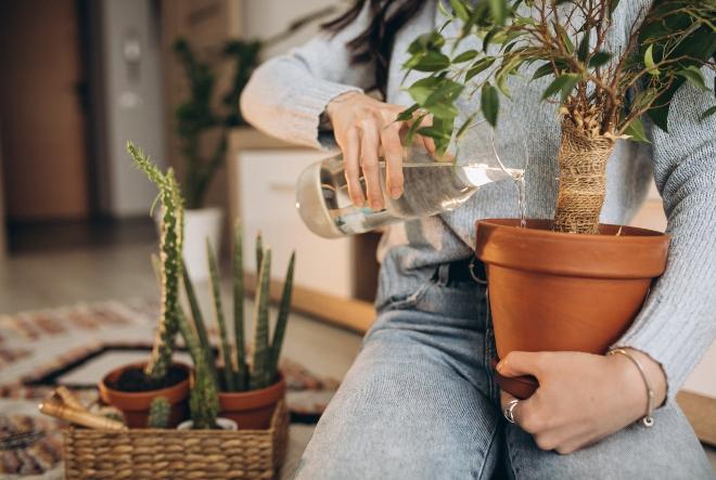 Fantastične sobne biljke koje pročišćuju zrak