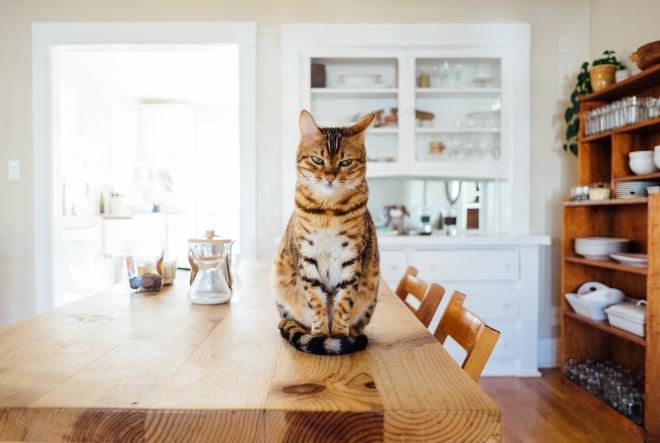 Mačke vam dolaze s razlogom!